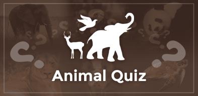 Animal Quiz, Quiz d'Animaux, Giochi Quiz Animali, Викторина про Животных, Quiz Animal, Kviz o Životinjama